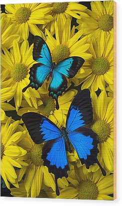Two Blue Butterflies Wood Print by Garry Gay