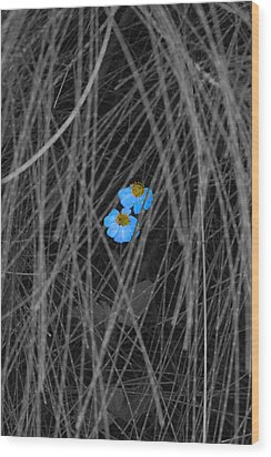 Two Blue Wood Print by Douglas Barnard