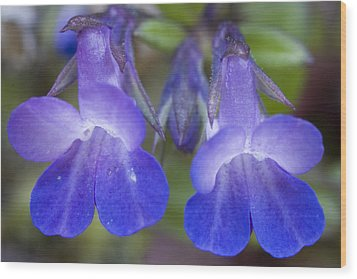 Wood Print featuring the photograph Two Blue by Sonya Lang