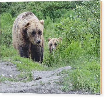 Two Brown Bears Wood Print