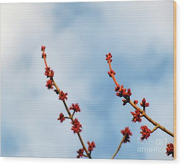 Two Budding Branches Wood Print by CML Brown