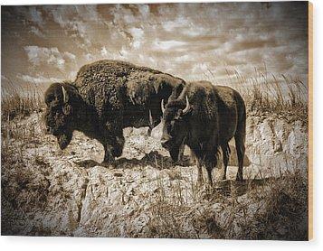 Two Buffalo Wood Print