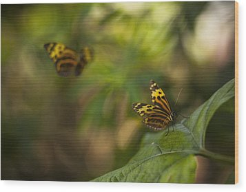 Two Butterflies Wood Print