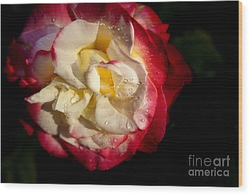 Two Color Rose Wood Print by David Millenheft