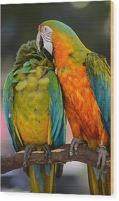 Two Colorful Macaws Wood Print