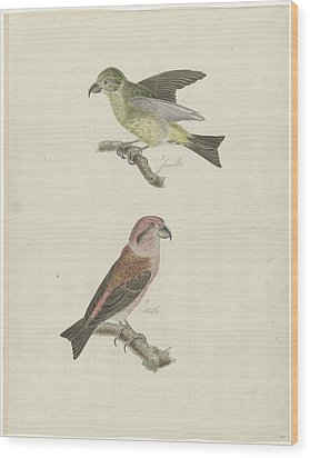 Two Crossbills, Possibly Christiaan Sepp Wood Print by Quint Lox