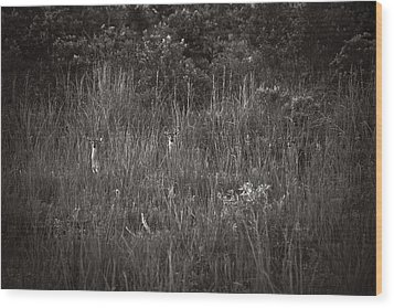 Wood Print featuring the photograph Two Deer Hiding by Bradley R Youngberg