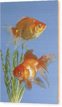 Two Fish Fs101 Wood Print by Greg Cuddiford