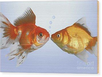 Two Fish Kissing Fs502 Wood Print by Greg Cuddiford