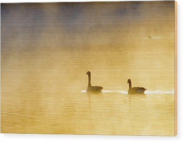 Two Geese Wood Print by Tommytechno Sweden