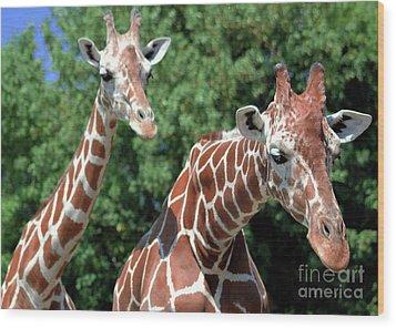 Two Giraffes Wood Print by Kathleen Struckle