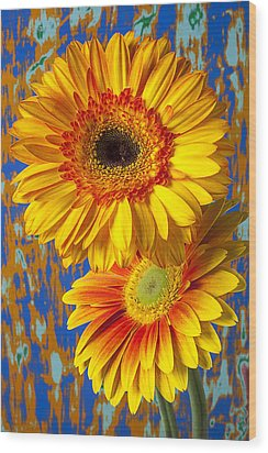 Two Golden Mums Wood Print by Garry Gay