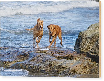 Two Golden Retriever Dogs Running On Beach Rocks Wood Print by Susan Schmitz
