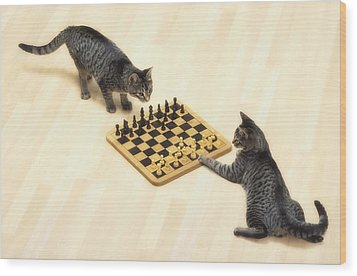 Two Grey Tabby Cats Playing Wood Print by Thomas Kitchin & Victoria Hurst