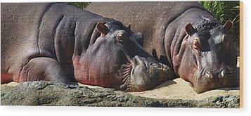 Two Hippos Sleeping On Riverbank Wood Print by Johan Swanepoel