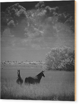 Wood Print featuring the photograph Two Horses by Bradley R Youngberg