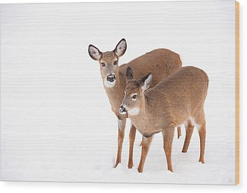 Two In The Snow Wood Print by Karol Livote