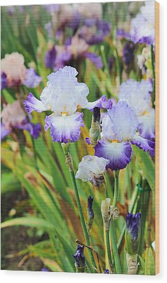 Wood Print featuring the photograph Two Iris by Patricia Babbitt