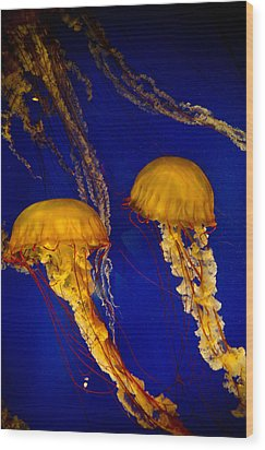 Two Jellyfish Wood Print by Jessica Berlin