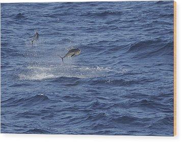 Two Jumping Yellowfin Tuna Wood Print