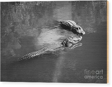 Two Large American Alligators Standing On Underwater Log Near Water Surface Florida Usa Wood Print by Joe Fox