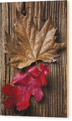 Two Leafs  Wood Print by Garry Gay
