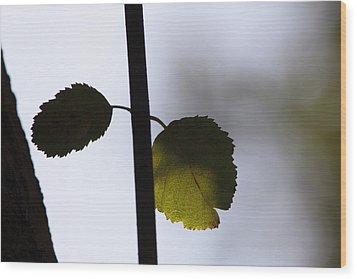Two Leaves Wood Print by Ulrich Kunst And Bettina Scheidulin