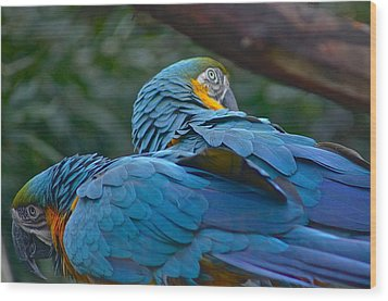 Two Macaws Wood Print by Colleen Renshaw