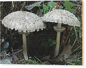 Two Magnificent Toadstools Wood Print