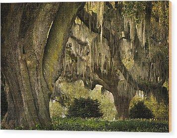 Two Oaks Wood Print by Denis Lemay