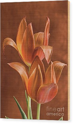 Two Orange Red Tulips Entwined Wood Print