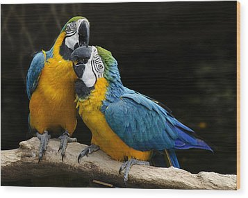 Two Parrots Squawking Wood Print by Dave Dilli
