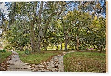 Two Paths Diverged In A Live Oak Wood...  Wood Print by Steve Harrington