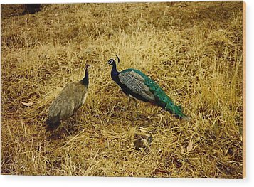 Two Peacocks Yaking Wood Print by Amazing Photographs AKA Christian Wilson