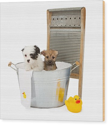 Two Puppies Taking A Bath Wood Print