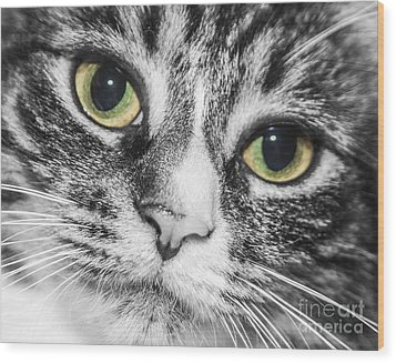 Two Toned Cat Eyes Wood Print by Jeannette Hunt