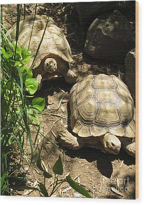 Two Tortoises Wood Print by CML Brown