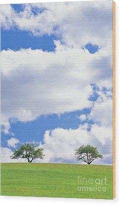 Two Trees Wood Print by Alan L Graham