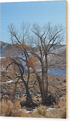 Two Trees In The Mountains Wood Print