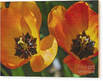 Two Tulips Wood Print by Elena Elisseeva