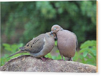 Two Turtle Doves Wood Print by Cynthia Guinn