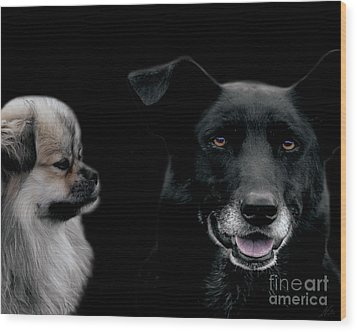Two Types Of Mutts Wood Print by Nola Lee Kelsey