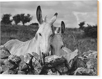 Two White Irish Donkeys Wood Print by RicardMN Photography