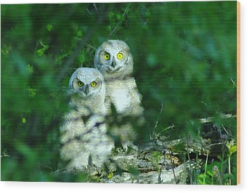 Two Young Owls Wood Print by Jeff Swan