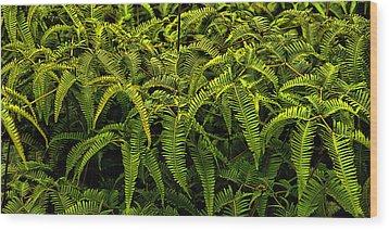 Uluhe Fern Wood Print