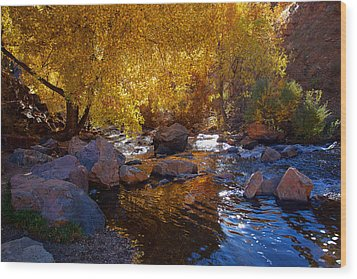 Under A Gold Canopy Wood Print by Jim Garrison