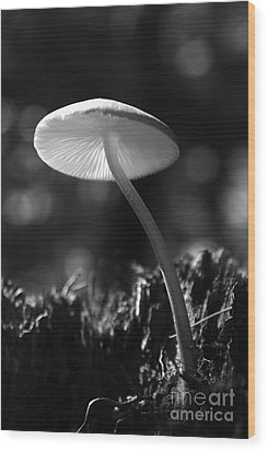 Wood Print featuring the photograph Under A Mushroom by Jan Piller