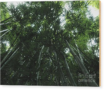 Under The Bamboo Haleakala National Park  Wood Print by Vivian Christopher