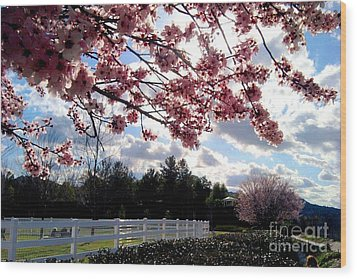 Under The Cherry Blossom Wood Print