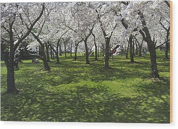 Under The Cherry Blossoms - Washington Dc. Wood Print by Mike McGlothlen